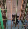 3 Dogs Rescued From Certain Death