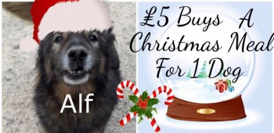 Buy A Dog's Christmas Dinner