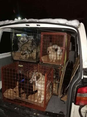 Donate For Transport For Foster Dogs