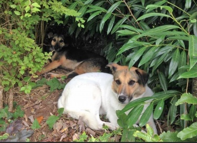 Flora and Blacky (Hattie) Success Story