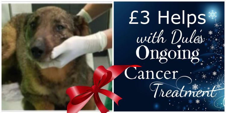 Donate For Christmas Vet Fees